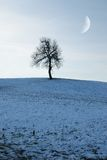 查出的草甸结构树 库存照片