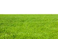 查出的草绿色 库存图片