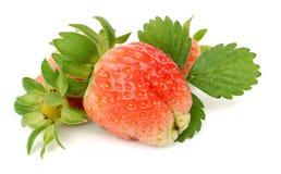 查出的草莓二白色 免版税库存照片
