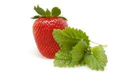 查出的草莓白色 免版税库存图片