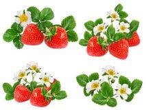 查出的草莓白色 免版税图库摄影