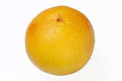 查出的葡萄柚 免版税库存照片