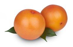 查出的葡萄柚 免版税库存图片