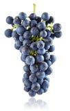 查出的蓝色字符串新鲜水果葡萄 免版税库存照片
