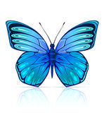 查出的蓝色蝴蝶昆虫 向量例证