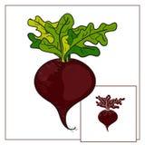 查出的蔬菜 甜菜 向量例证