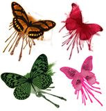 查出的蝴蝶grunge 免版税图库摄影