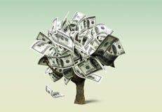 查出的货币结构树白色 皇族释放例证
