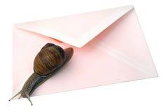 查出的邮件蜗牛 免版税库存照片