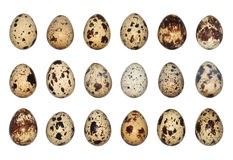查出的鹌鹑蛋 免版税库存照片