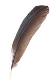 查出的黑色羽毛 免版税图库摄影
