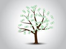 查出的货币结构树白色 免版税库存图片