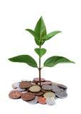 查出的货币结构树白色 免版税库存照片