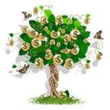 查出的货币结构树白色 免版税图库摄影