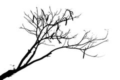 查出的结构树 库存图片