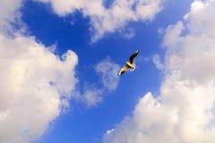 查出的黑色概念自由 在蓝天的飞行海鸥与云彩 免版税库存照片