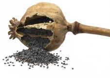 查出的poppyhead罂粟的种子 免版税图库摄影