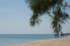 查家上午海滩 库存照片