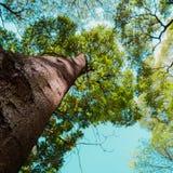查寻一棵大树 库存照片