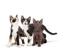 查寻三只逗人喜爱的好奇的小猫 免版税库存照片