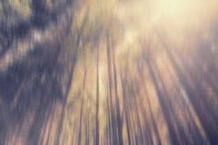 查寻入树 免版税库存图片