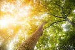 查寻在与阳光的树下在热带雨林里 免版税图库摄影