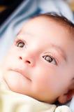 查寻婴孩的眼睛 免版税库存图片