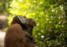 查寻对天空的一只大公猩猩 免版税图库摄影