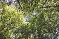 查寻新鲜的绿色的叶子 免版税库存图片