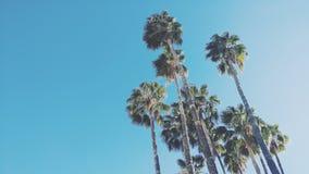 查寻棕榈树在阳光下 库存图片
