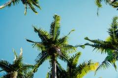 查寻棕榈树 免版税库存照片