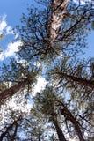 查寻结构树的森林 库存照片