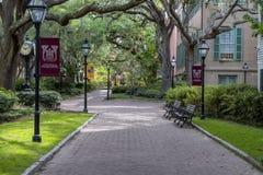 查尔斯顿学院  免版税库存图片