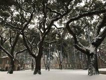 查尔斯顿,暴风雪学院2018年 免版税图库摄影
