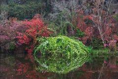 查尔斯顿SC木兰庭院在春天 免版税图库摄影