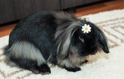 查找哀伤的兔子 免版税库存图片
