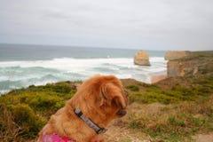 查找海运的狗 免版税库存照片