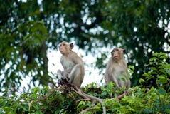 查找猴子坐的结构树 免版税图库摄影