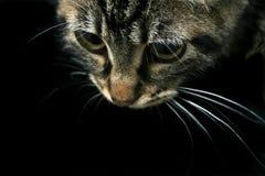 查找的猫下来 免版税库存图片