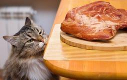 查找肉片表的猫 免版税库存照片