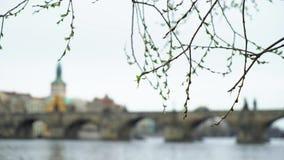 查理大桥在布拉格市 影视素材