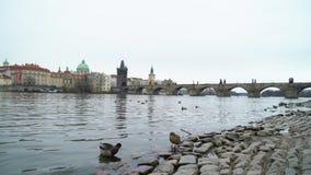 查理大桥在布拉格市 股票录像