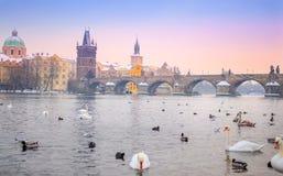 查理大桥,日落的布拉格全景  捷克语 免版税库存图片
