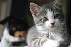 查理小猫 免版税图库摄影