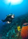 查看海绵的潜水员在圣卢西亚 库存图片