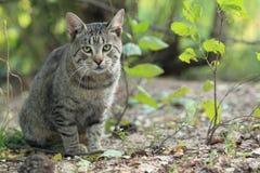查看照相机的虎斑猫 免版税库存照片