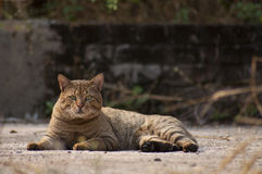 查看照相机的虎斑猫 免版税图库摄影