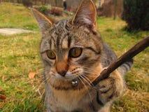 查看照相机的虎斑猫 免版税库存图片