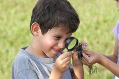 查看甲虫的男孩通过放大镜 免版税库存图片