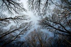 查寻冬天树透视  免版税图库摄影